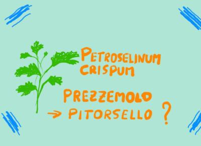 pitorsello